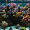 we can help you look after your saltwater aquarium